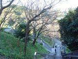 みかん山桜の木