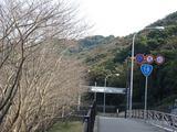伊勢町の桜の木