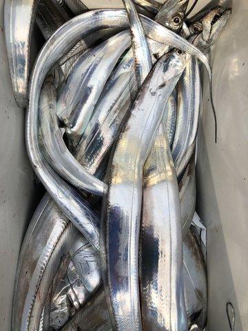 太刀魚釣り大会 (28)