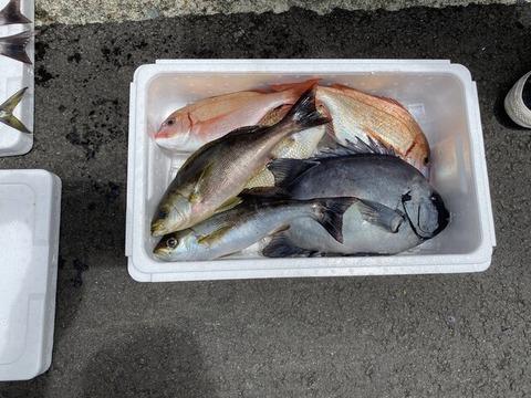 イサギ釣り (4)