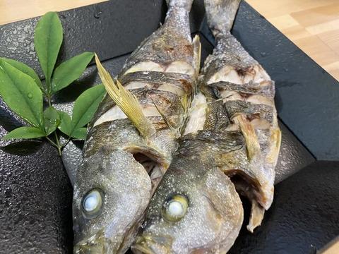 イサギ釣り (6)