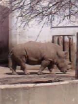 旭山動物園13