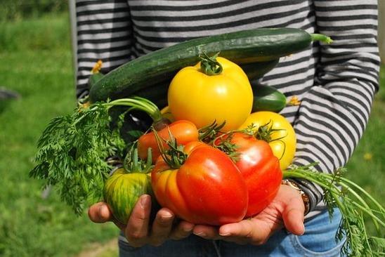 野菜を持つ人