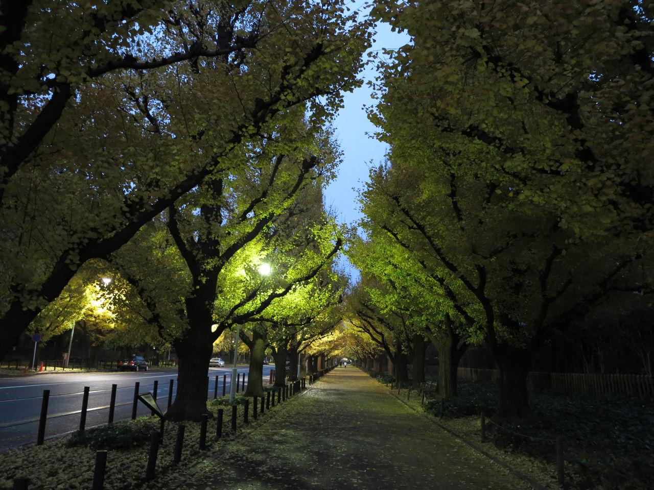 20121204(火) 雨の外苑 夜霧の日比谷 今もこの目に 優しく浮かぶ ...