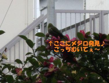 blog 197