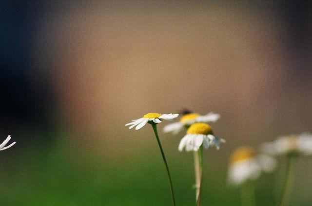 置かれた場所で咲きなさい 渡辺和子 幻冬舎