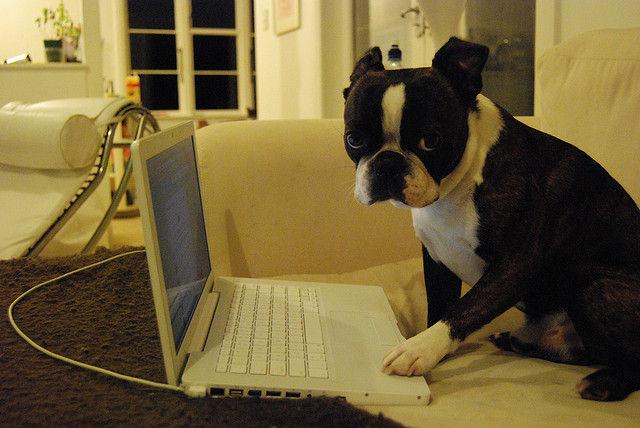 仕事と私どっちが大事なのって言ってくれる彼女も仕事もない。わが妄想のツイッター録 処之助 角川書店