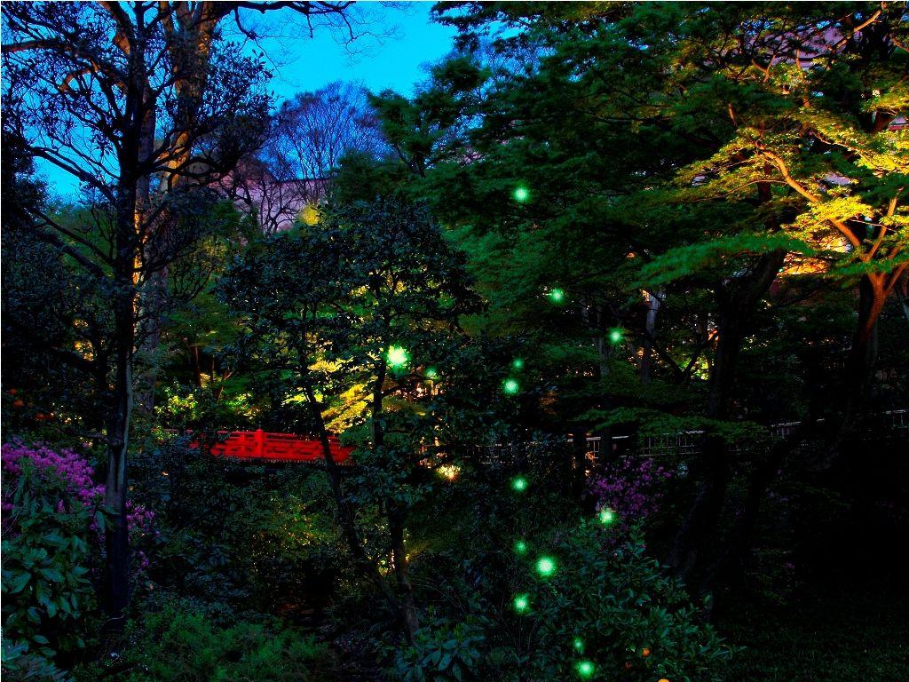 ほたるの夕べ 画像 椿山荘
