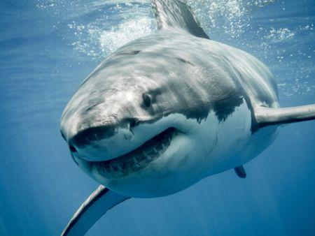 サメ (3)