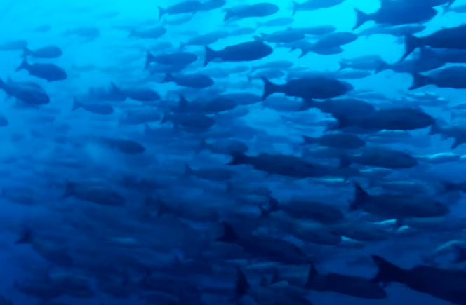 【動画】BBCアース制作の10時間ぶっ続け海洋映像、Youtubeで公開 流しっぱなしで癒やされる