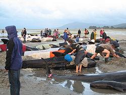 千葉港に体長13メートルのクジラ出現 東京湾での目撃、6月以降16件目 一体何が