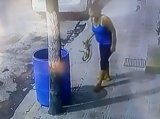 【GIFあり】犬「わんわん遊んで!」 女性「うっとうしいな」 → 犬をゴミ箱にポイした鬼畜女に非難の声