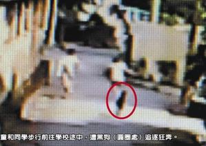 【悲報】犬に追いかけられた少女、呼吸困難に陥り死亡