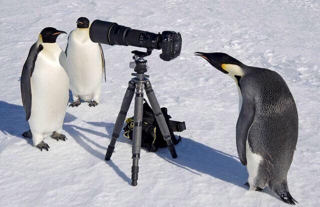 【画像】ペンギンの「はぇ〜」感は異常wwwwww