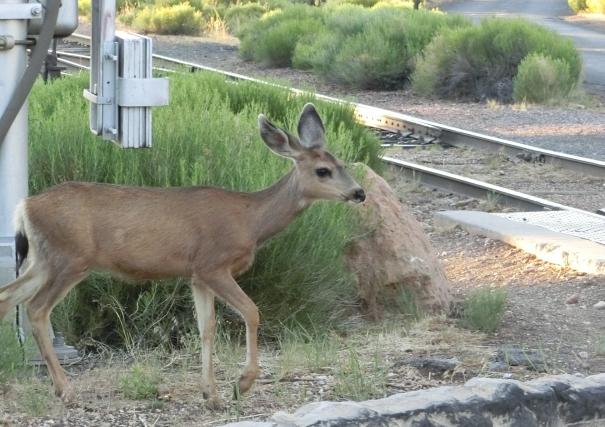 【電車】当たりすぎ?電車が約2時間半の間に鹿→鹿→猪→鹿に衝突 地元では「あーまたか」の声も…JR紀勢本線
