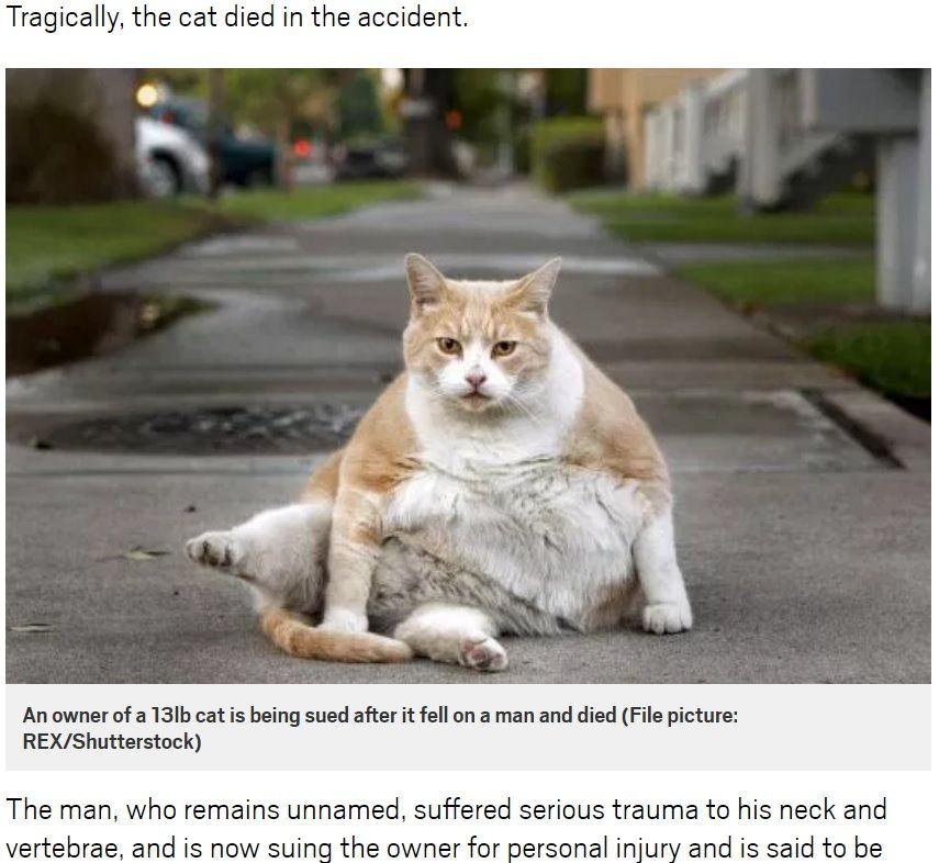 【不幸な偶然】8階から落下した猫、階下にいた男性と衝突して息を引き取る ぶつかった男性は脊椎と首に重傷(猫の遺影あり)