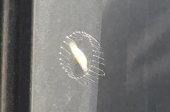 【なんだこれ!?】未知の昆虫の変な卵の続き 経過はまだよ