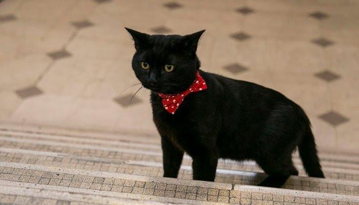 英財務省で「ネズミ捕獲長」の公式の肩書を持つ猫が行方不明になり省全体がパニックに陥る騒ぎに