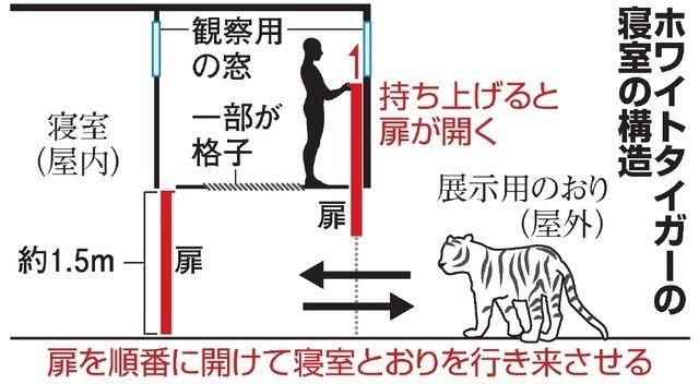 【ホワイトタイガー死亡事故】 園長、図解で説明「トラと鉢合わせることはあり得ない。原因が全然分からない」
