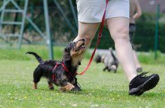 リードを外した小型犬、大型犬を噛む 注意された小型犬の飼い主がカッター出し「何やねん」