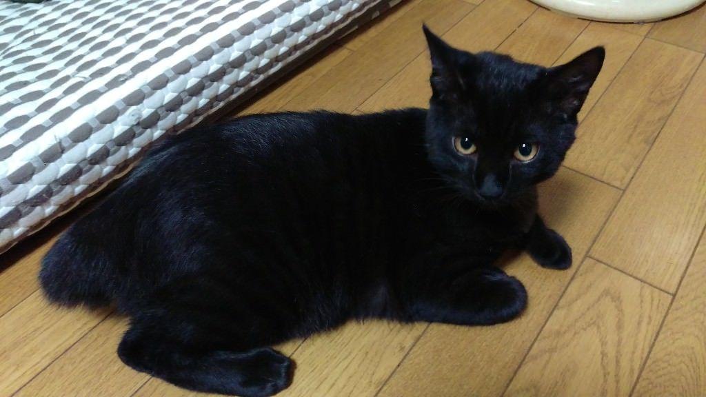 【画像】うちの黒猫みる?