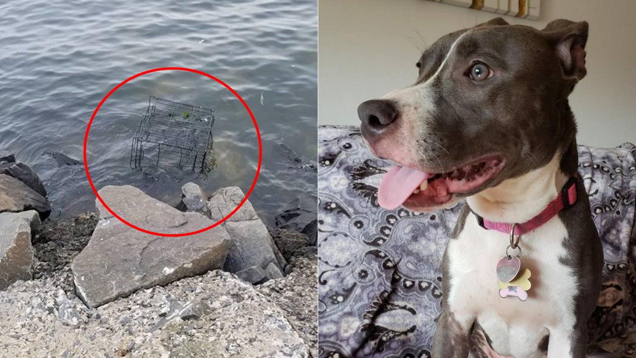 【酷すぎ】ケージに閉じ込められたまま海に投げ捨てられた犬 満潮ギリギリで救出成功