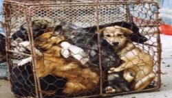 子犬や子猫の販売禁止へ 劣悪な飼育環境「パピーファーム(子犬工場)」根絶へ