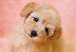 【悲報】バカッター「犬かと思ったら○○でした」←1ミリも犬に見えない画像を投稿