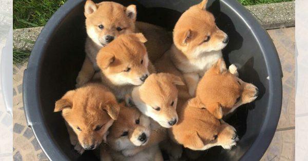 「飼育代がかかる」 生まれたて子犬6匹を生き埋めにした疑い おっさんを書類送検