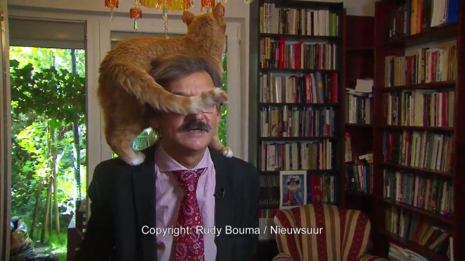 【ほっこり動画】オランダで真面目な政治のインタビュー中に猫が頭に乗っかる放送事故 耳を舐めたり尻尾で邪魔したり