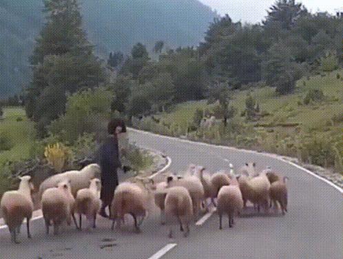 【GIF】羊、恐すぎだろ・・・・