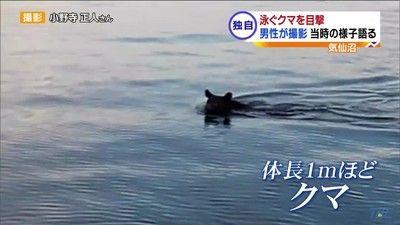 【クマは泳ぎます】「ハァハァ」と息遣い 海を泳ぐクマを撮影 宮城・気仙沼(動画)