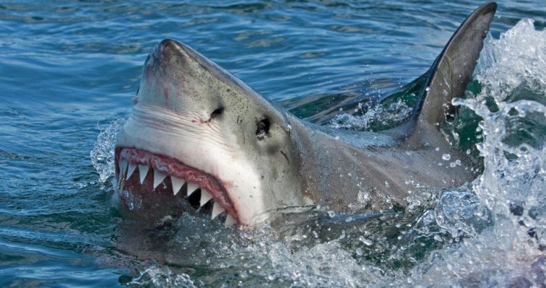 【恐怖】サメに襲われた観光客、遺体の一部が見つかる
