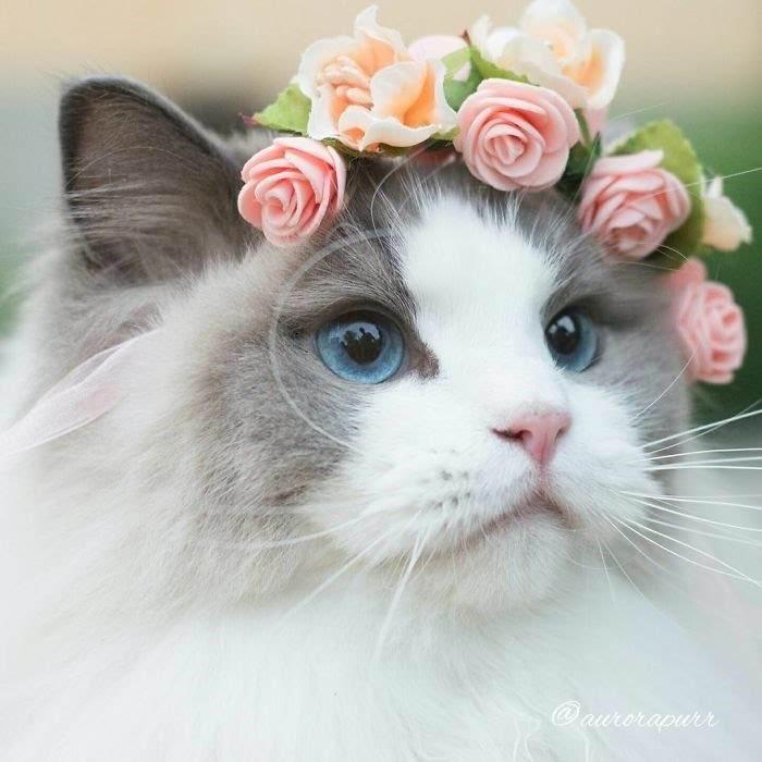 【画像】このネコ可愛すぎだろwwwwww