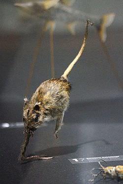 【画像】鼻行類とかいう謎の多すぎる動物wwww
