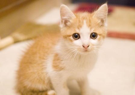 【画像】みんなのネコ自慢スレwwww