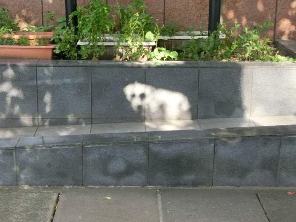 【画像】Twitter民「白い犬がいると思ったら、木漏れ日でした」