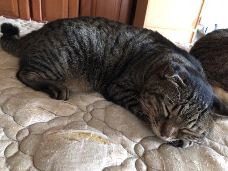 【ネコ画像大量】飼い猫の画像でも上げとけwww