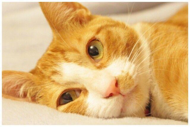 【虐待】動物保護施設で犬猫虐待、ネットに動画 猫の頭に袋をかぶせ突き落とし、犬の首を絞める 水戸市のNPO理事長(55)書類送検