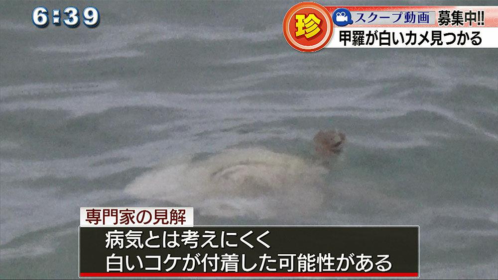 漁師もびっくり 白いアオウミガメが見つかる