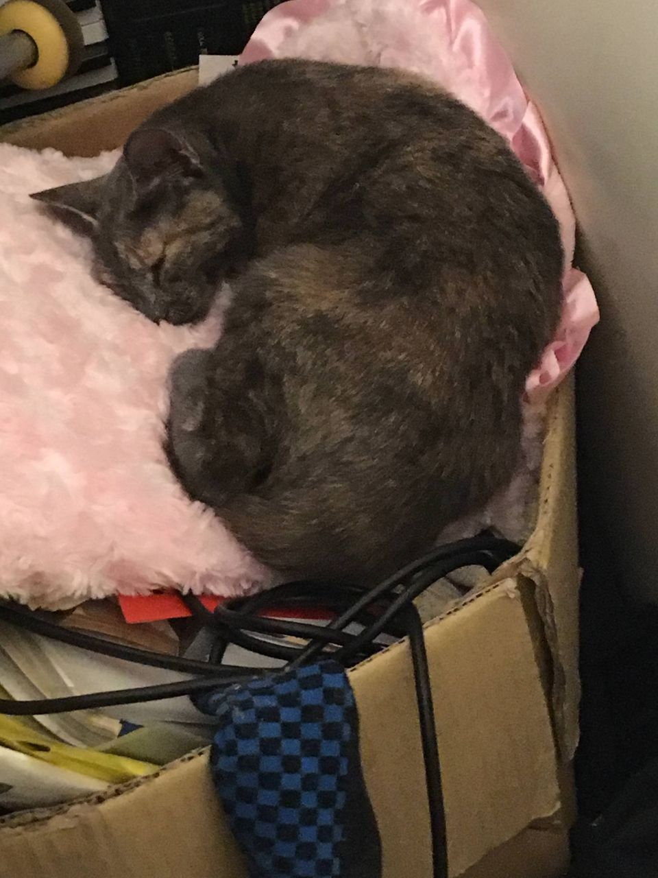 猫がワイの汚い部屋で寝てる画像貼ってく