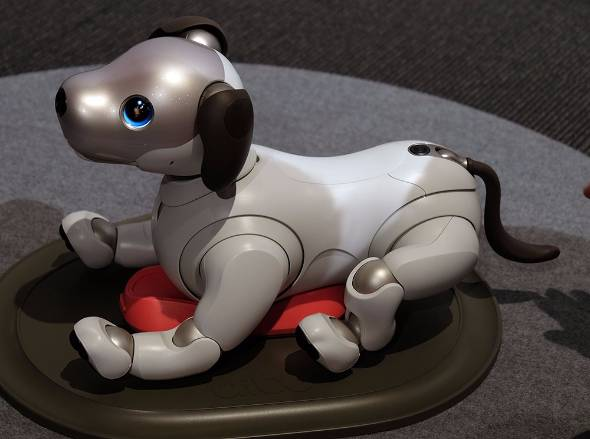 【実験】本物の犬は「aibo」と仲良くなるのかソニーが共同生活させた結果→下の存在として格付けwwww