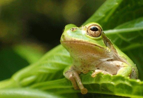 """【朗報】静岡に日本最大の""""カエル動物園""""がオープン!!"""