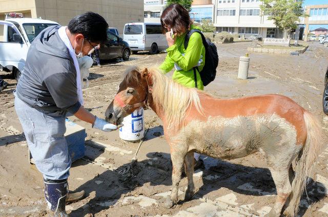 【画像】大雨で行方不明になっていたお馬さん、とんでもないところで見つかるwwww
