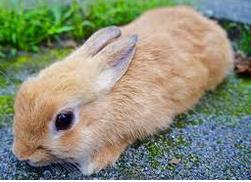 【画像】リーゼントでビシッ! キメっキメのウサギさんが話題にwwww