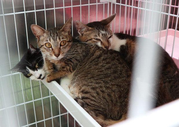 【朗報】42匹多頭飼いで保護された名古屋の猫ちゃんたち 外傷も異臭もなくきれいで飼い主は名前も覚えていた