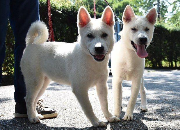 【朗報】和歌山公園動物園に紀州犬2頭が仲間入り 開園以来初 さつきちゃんとあやめちゃん