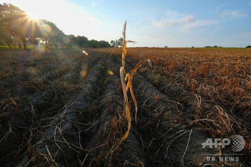 【悲報】ドイツでも記録的な熱波と旱魃でジャガイモが全滅 明日から何食えば