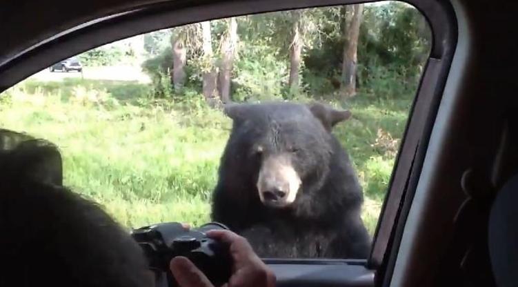 【衝撃】野生のヒグマが車のドア開け侵入してくるという恐怖映像