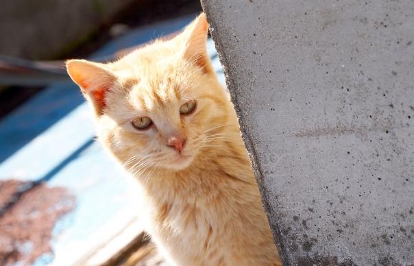 【不審者情報】猛暑ゆえ?猫語を操る「ニャーニャーおじさん」 東京・世田谷に出現!